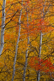 Alsomst-Abstract-Aspen