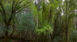 Angwin Canopy