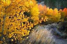 Aspen-at-Thomas-Cree