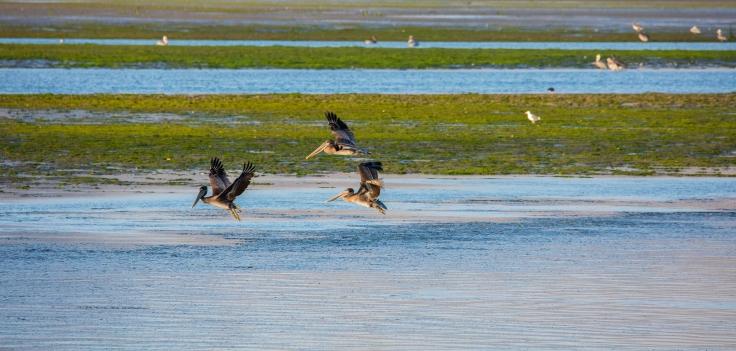 bodega-bay-birders-paradise