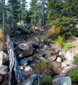 Creek-at-Sonora-Pass-cropped