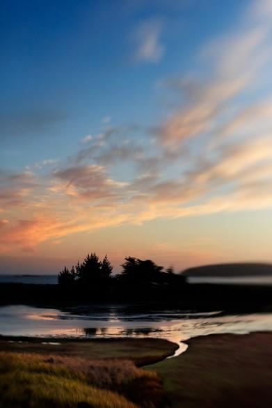 Cypress-SIlhouettes Bodega Bay