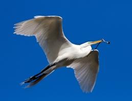 Egret and Stick_001