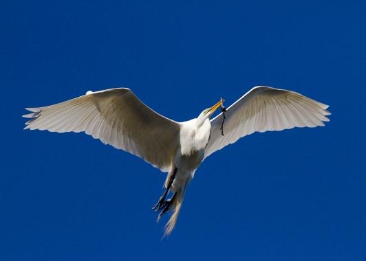 Egret-and-Stick_003