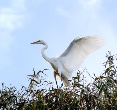 Egret-Form