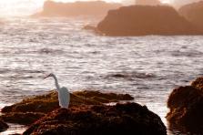 Egret-on-the-Rocks