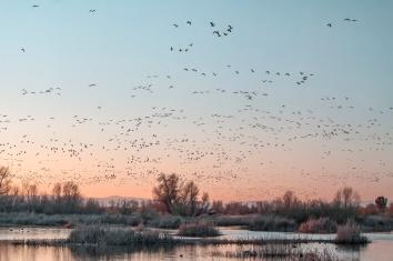 February-Migration