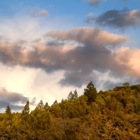 HIlls of Annadel State Park