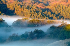 Foggy Liberty Glen