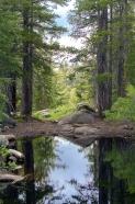 Frog Lake California