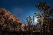 Joshua-Tree--Moonrise