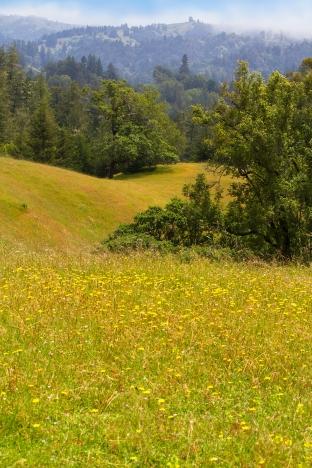 King Ridge Road View