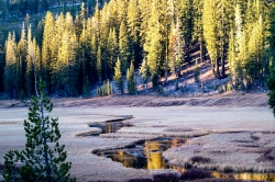 Lassen-Meadow-Reflections
