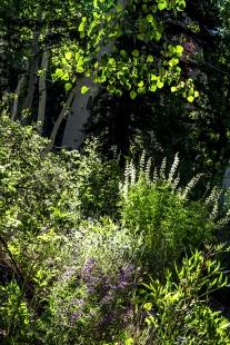 Lupine Garden