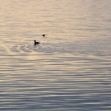 Patterns-of-Morning-Light