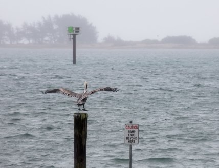 Pelican-Levitation