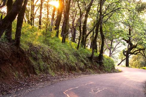Pine Flat Roadway