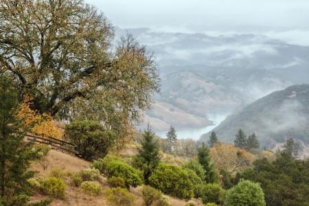Rain on a Foggy Morning