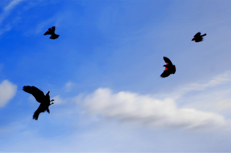 silhouettes of 4 flying birds