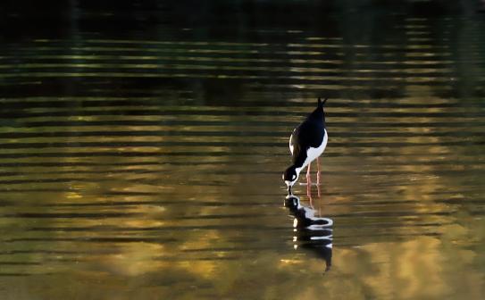 Stilt Leg & Pond