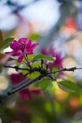 Sunlit-Blossoms