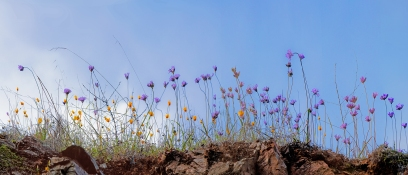 Sweetwater-Springs-Wildflower-Pano