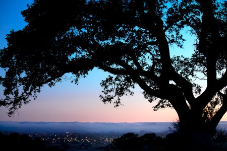 Taylor Mountain Oak Silhouette