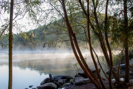 Through-Lakeside-Trees