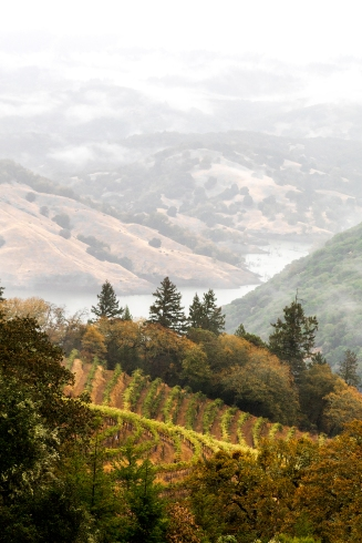 Vines-and-Hillsides-on-a-Rainy-Morning