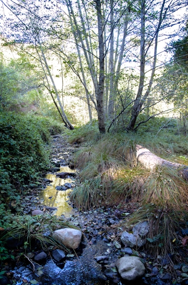 Wildcat-Creek-in-Autumn