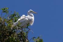 Wind-Ruffled-Feathers