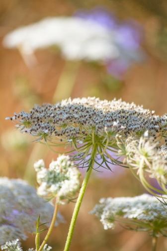 Windy-Bouquet