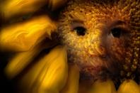 Dramatic-Sunflower-2