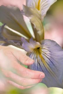 Hand-+-Iris