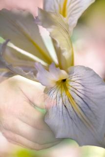 Iris-and-Hand-2
