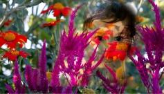 Mecican Sunflowers