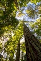 Classic Redwood View
