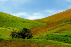 Converging Hillsides