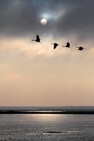 Crane-Silhouettes-2