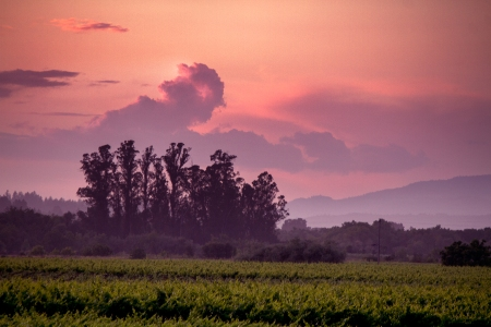 Eastside Road Sunset Cloud
