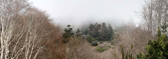 Foggy Gulch in Mendocino County