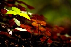 Foliage Under Canopy