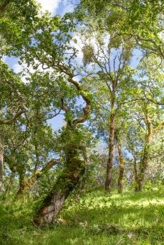 Foothill Park Spring Greens