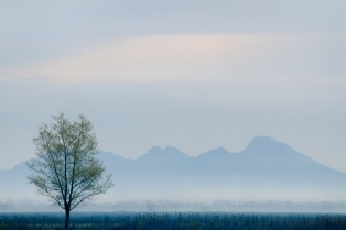 Morning-Fog-Colusa-Buttes