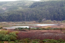Pescadero Marsh and Eucalyptus Grove