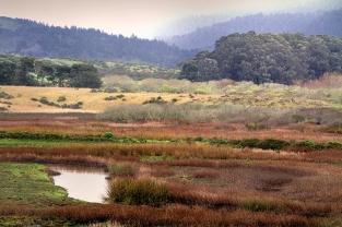 Pescadero Nature Preserve