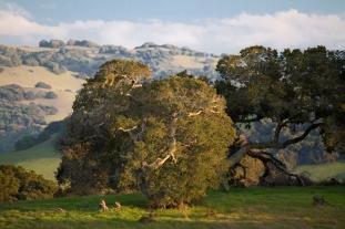 Petaluma Hillside