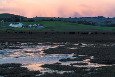 Marsh Rd Farm 2