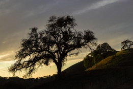 California-Ranch-Silhouette