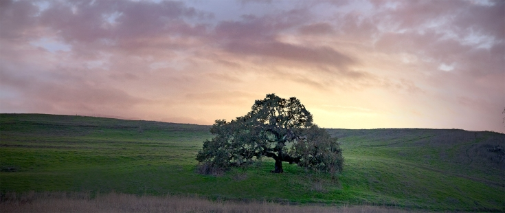 Crane-Creek-Oak-Tree-Panorama